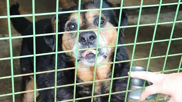 "Svitavy پناهگاه شخصی خود را برای سگهای ولگرد ""خود"" ایجاد خواهد کرد"